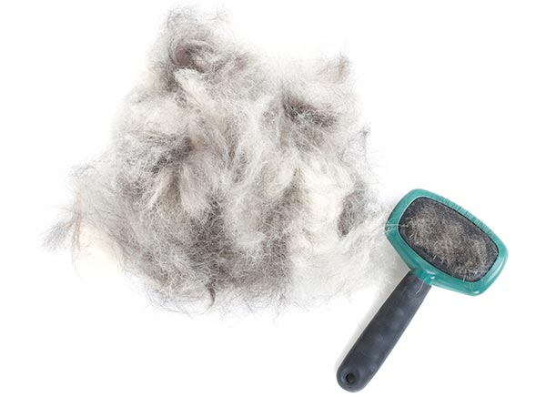 Pet Shedding